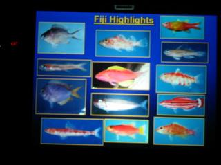 フィジーの魚