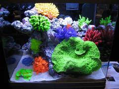レッドシーの綺麗なサンゴ水槽